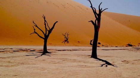 Afrika Namibia Safari Rejser