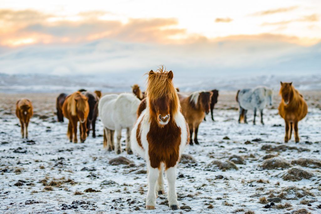 טיולי טבע באיסלנד