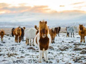 Islandia caballos viajes por la naturaleza