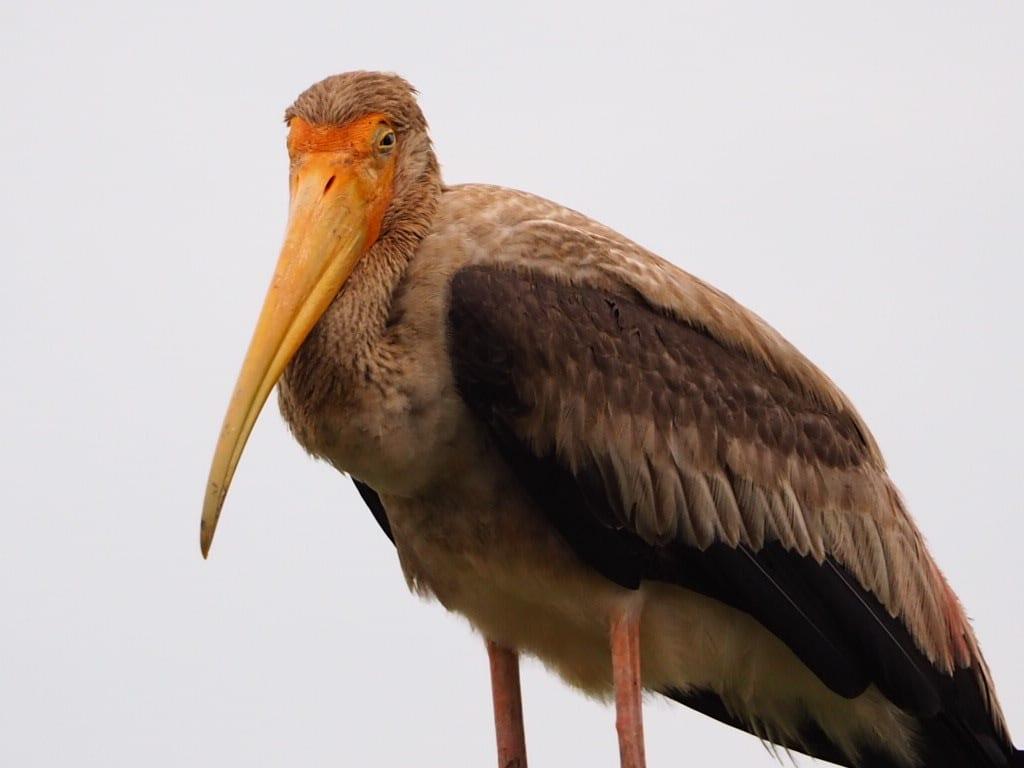 Sri lanka - Yala national park - fugl - rejser