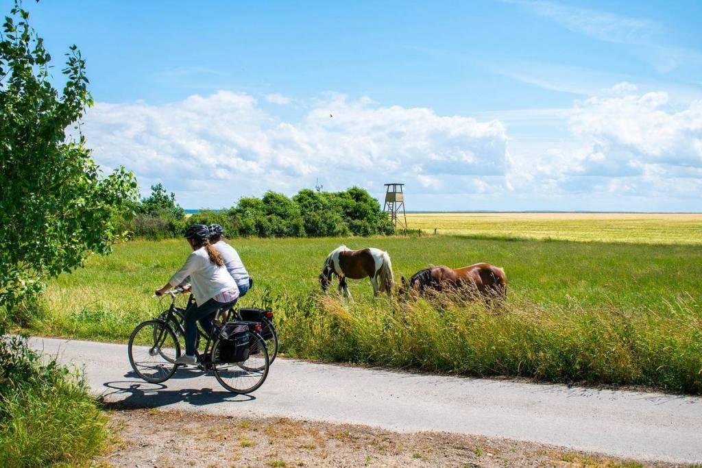 טיול באי Horsens Endelave באי - חופשה ביוטלנד