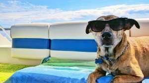 viaje de vacaciones para perros