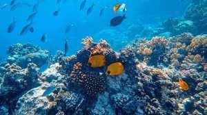 Palau, dyr, hav