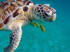 Maldivas - Tortuga - Agua - Viajes
