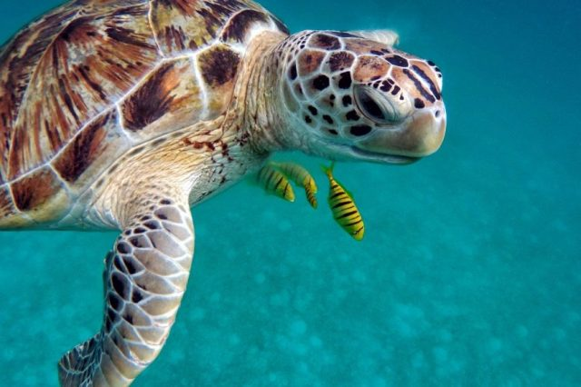 Maldiven - Schildpad - Water - Reizen