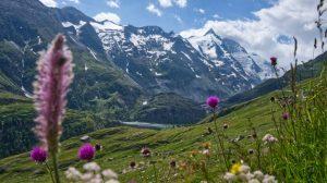 Alperne - Østrig - rejser