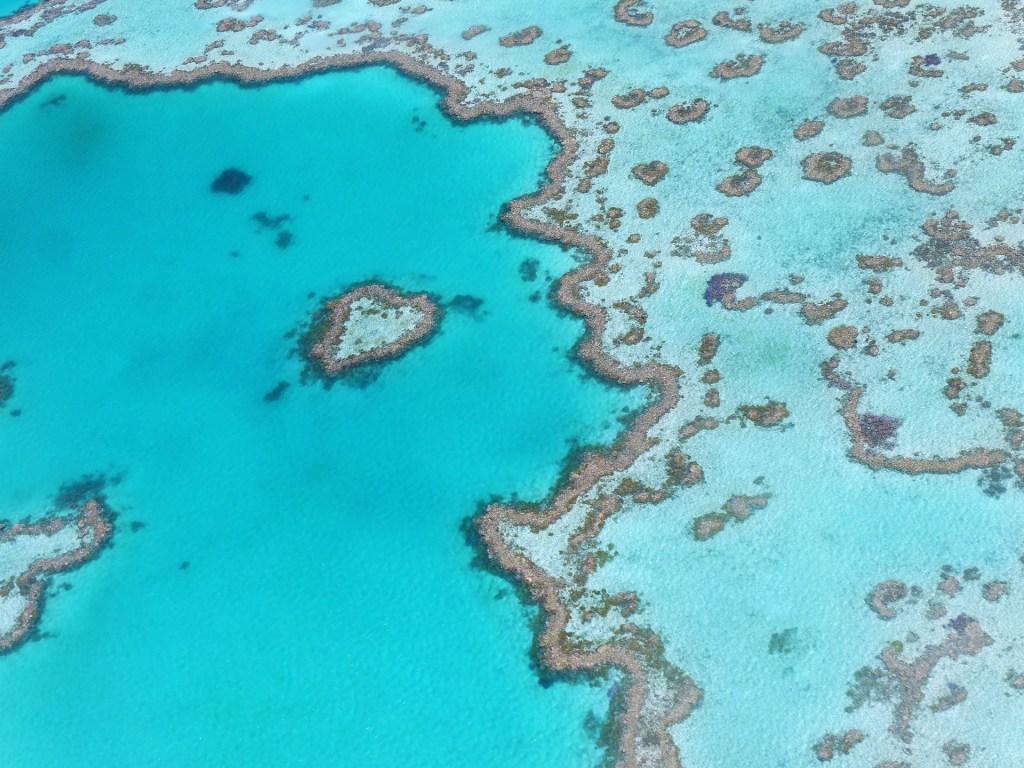 Stor barriere rev, Australia, korallrev, reise, vann, verdens sju underverk