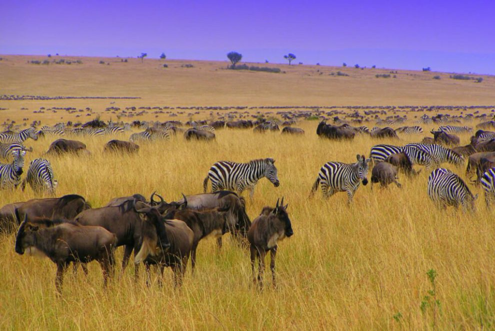 Oppdag Kenya og Seychellene, Kenya, Seychellene, Afrika, strandferier, reiser, rickshaw-turer og reiser