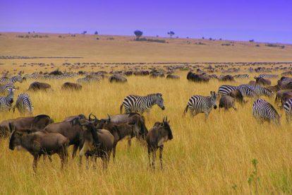 גלה את קניה ואת איי סיישל, קניה, סיישל, אפריקה, חופשות חוף, נסיעות, טיולי ריקשה וטיולים