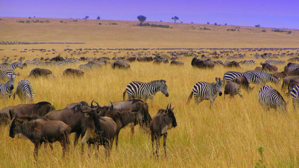 Découvrez le Kenya et les Seychelles, le Kenya, les Seychelles, l'Afrique, les vacances à la plage, les voyages, les excursions en pousse-pousse et les voyages