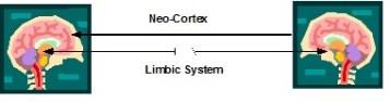 ANZPA neocortex