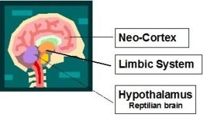 Brain for ANZPA Behavioural