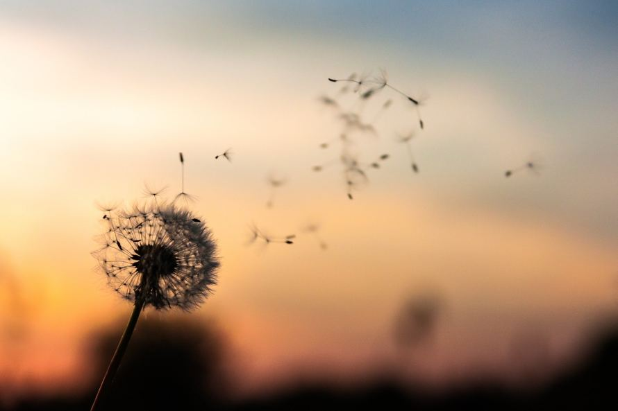 dandelion blowing in the wind - Throwing Caution to the Wind: Making Real Love