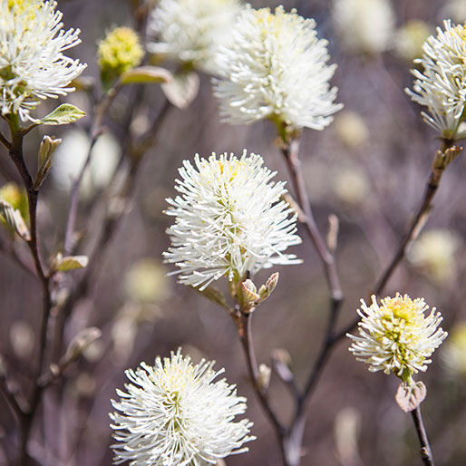 Portfolio - White Flowers