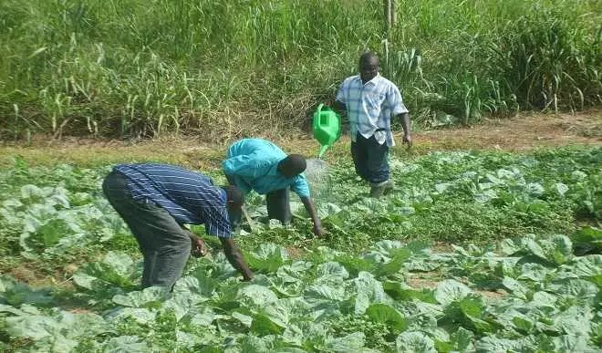 10 problems of agriculture in Nigeria,problems of agriculture in Africa,problem facing agriculture,list four problems of agricultural mechanization in Nigeria,solutions to agricultural problems pdf,problems of agricultural development in west Africa,problems of agriculture Wikipedia,solutions to problems facing agriculture,problems of agriculture