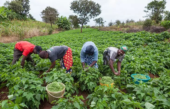 Types of agriculture in Nigeria,different forms of agriculture,4 types of agriculture,agriculture in nigeria today,types of agriculture in world,discus types of agriculture,types of agricultural practices,nigeria agriculture facts,list five forms of agriculture
