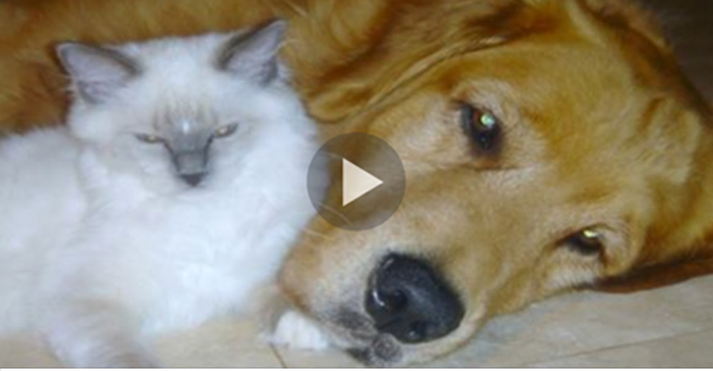 Loving Dog Notices Mother Cat Having A Difficult Time