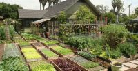 Family Grow All The Food They Need In Their Urban Homes ...