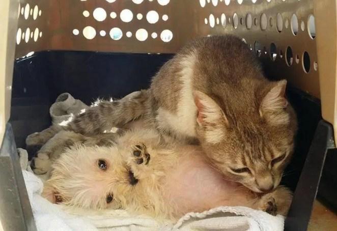 cat loves puppy