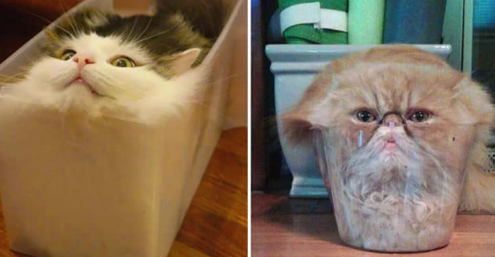 These 12 Funny Pics That Prove That Cats Are Actually Made
