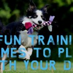 8 Fun Training Games To Play With Your Dog Release The Hounds