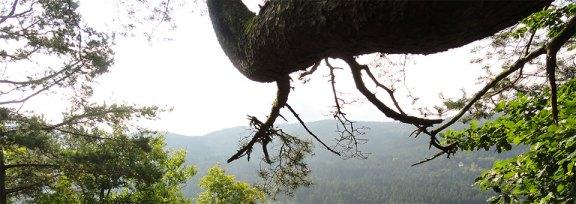 Slide - Au détour d'une forêt dans les Vosges