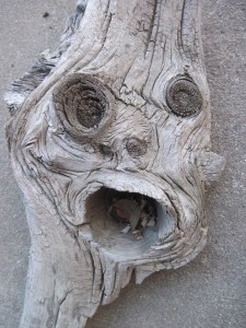 This piece of drift wood is looking at you!