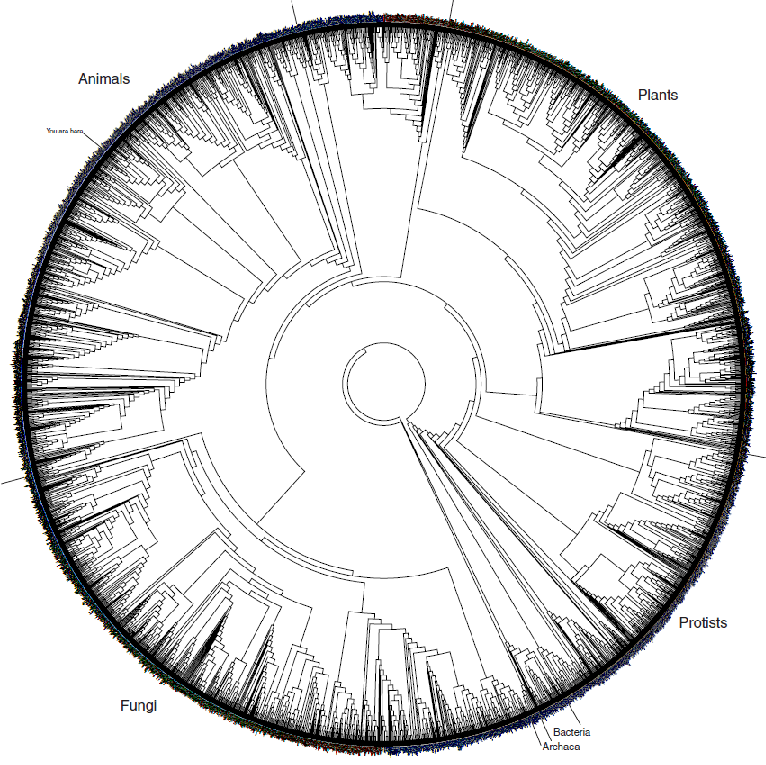 Phylogeny and the
