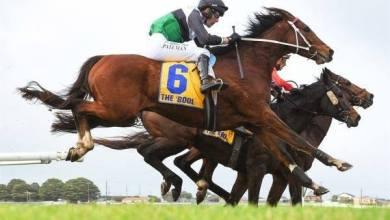 Photo of Jinete es suspendido 20 años por dopaje a su caballo, que fue sacrificado