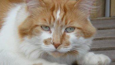 Photo of Murió Rubble, el gato más viejo del mundo»Adelgazó mucho y un día cruzó la calle y no volvió»