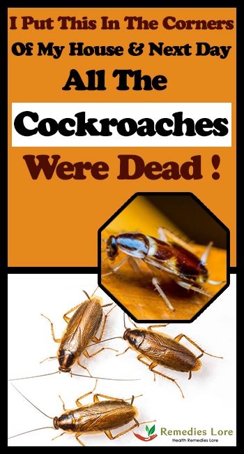 I Put This In The Corners Of My House And The Next Day All The Cockroaches Were Dead!