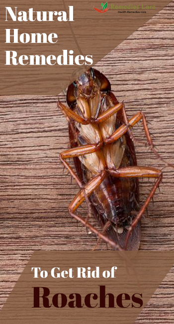 Natural Home Remedies To Get Rid of Roaches