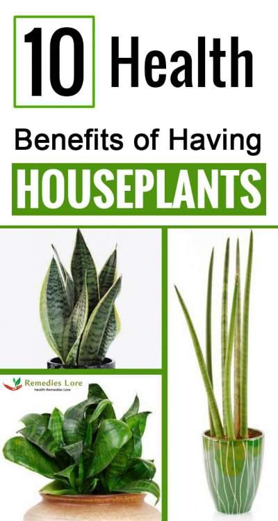 10 Health Benefits of Having Houseplants__1573709321_202.133.55.162