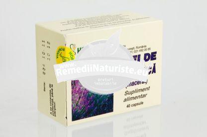ULEI LAVANDA 40cps HOFIGAL Tratament naturist carminativ calmant diuretic tulburari de somn stres