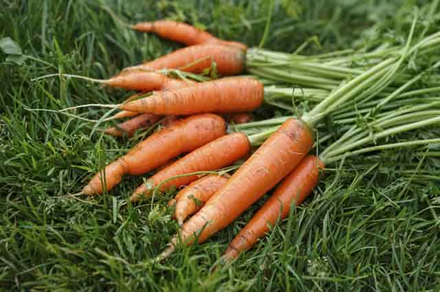As cenouras são ricas em betacaroteno, anti-inflamatório natural que combate a acne