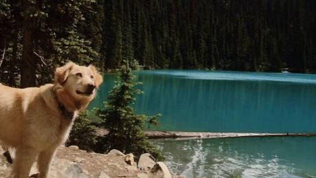 joffre lakes dog hike