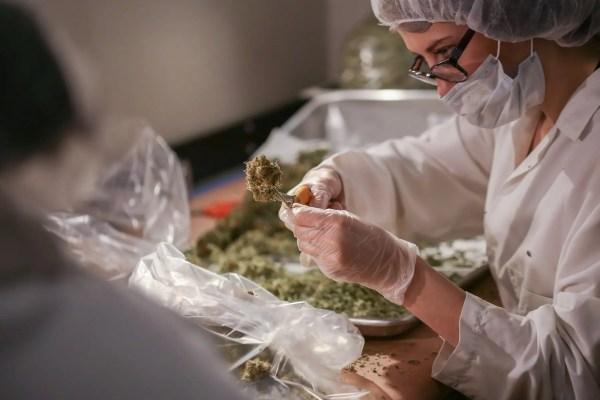 Marijuana Education Educate Remedy