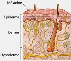melanine