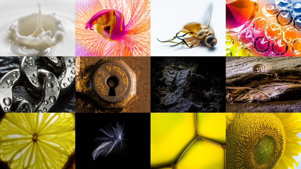 Stuck At Home? Try This Macro Photography Ideas