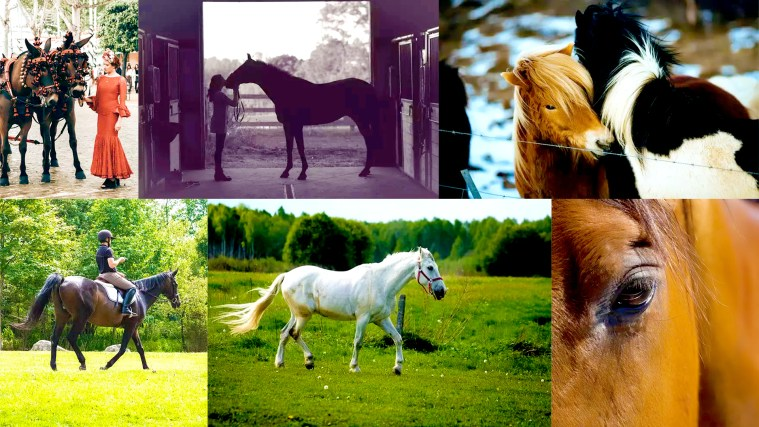 15 Tips For Taking Beautiful Horse Photography