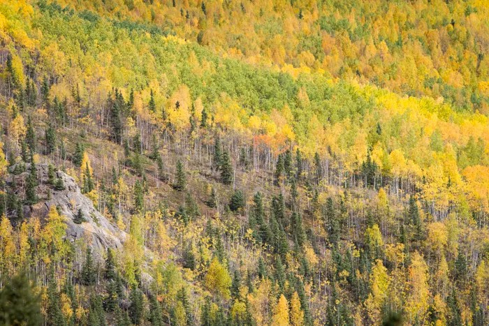 14 Tips For Awesome Forest Photography