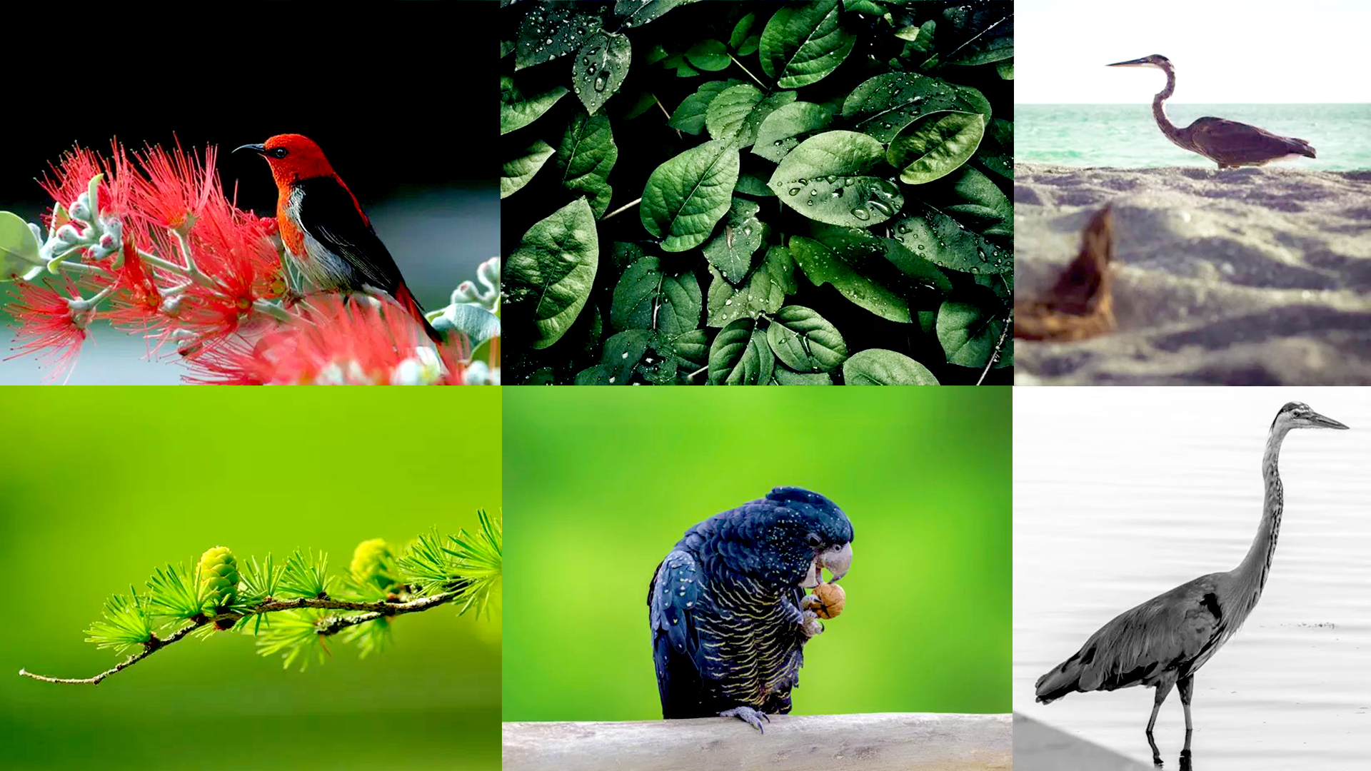 How To Improve Your Nature Photography Skills: Here Are 12 Tips