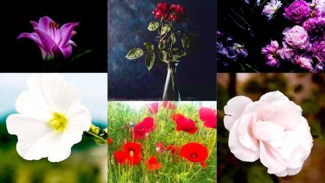 How To Take Beautiful Flower Photos With Your Smartphone: Here Is 12 Tips