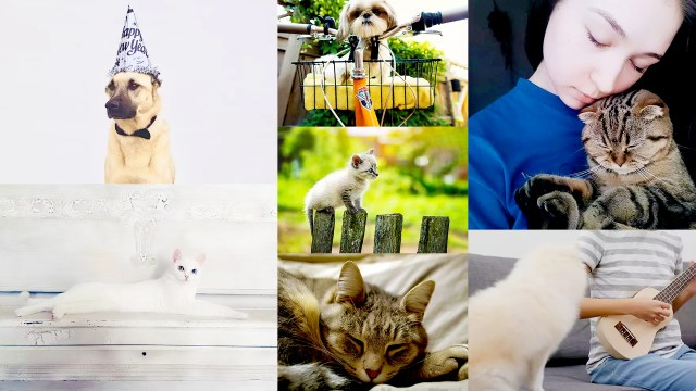 Pet Photography: How To Take Amazing Pet Portraits With Your Smartphone