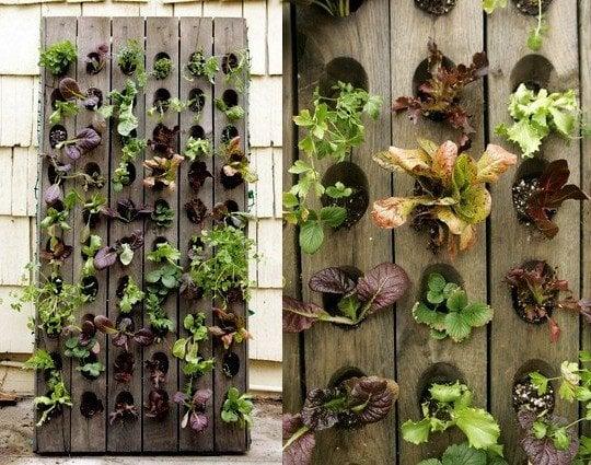 Vertical Lettuce Planter