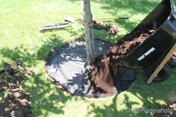 Mulch Weed Control Around Trees-8