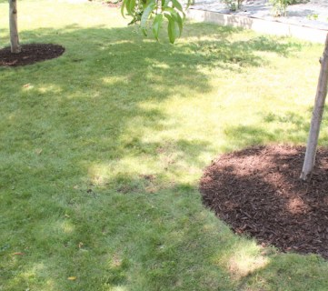 Bark Mulch Weed Control For Around Trees
