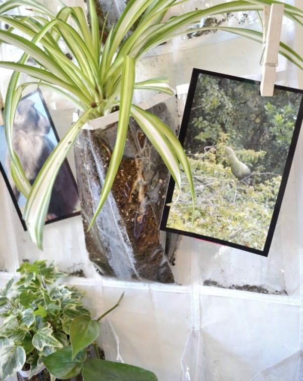 vertical plant hanger clipping
