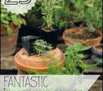 25 Indoor herb garden ideas @tipsaholic, #herbs #gardening