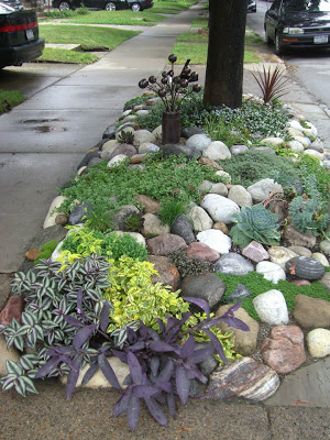 succulents and rocks hell strip